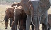 elephants_1410829_76991485
